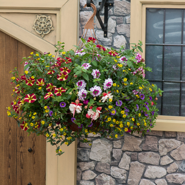 photo of Across The Universe (hanging basket insert)