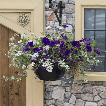 photo of Sea Blues (hanging basket insert)