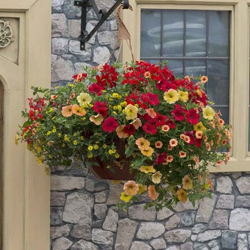 photo of Heat Wave (hanging basket insert)