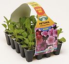 Buy Autumn Plug Plants
