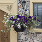 photo of Deep Blue Sea (hanging basket insert)