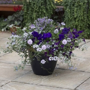 photo of Deep Blue Sea (patio container insert)