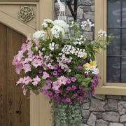 photo of Runaway Bride (hanging basket insert)