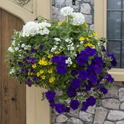 photo of The Beach (hanging basket insert)