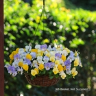 starter plants : Pansy Cool Wave Pastel Mixed